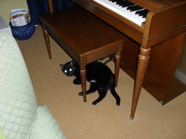 My cat under the piano bench at home.